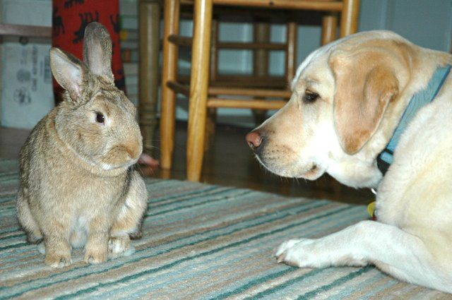 Bunny Gives His Dog Friend Face-Cleaning Lessons 1