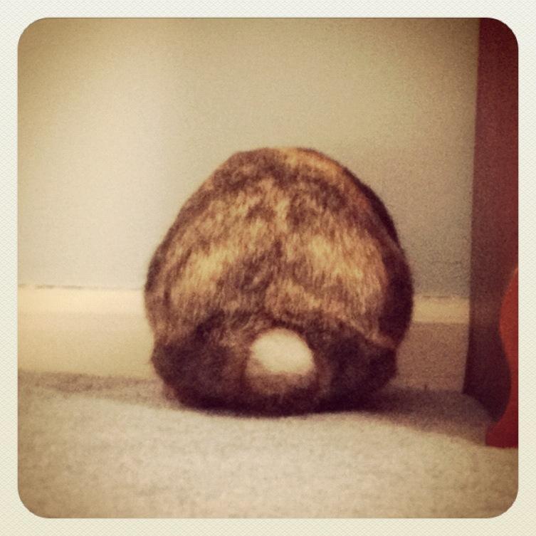 Round Bunny Rump, Part 2
