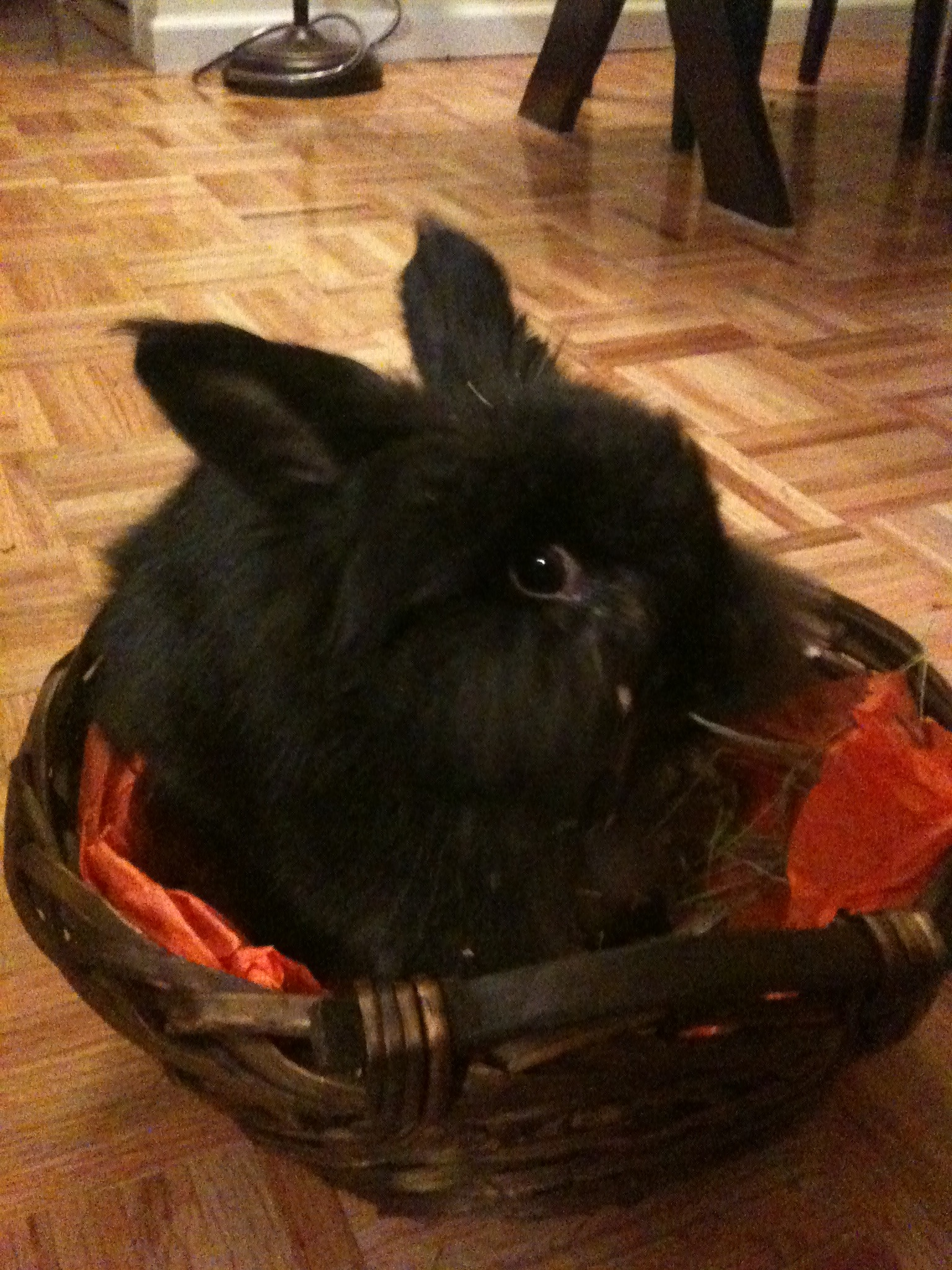 Bunny Brought Home Hay in Her Trick-or-Treat Basket