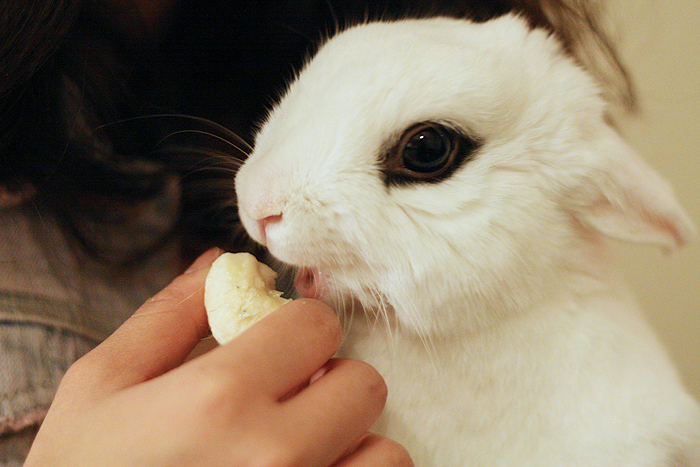 Bunny Is Delighted to Have Some Banana