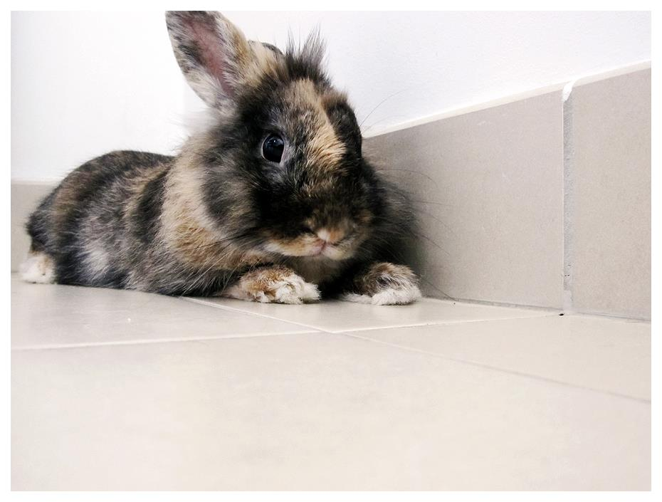 Little Bunny Relaxes on the Tiled Floor