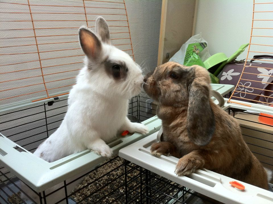 Bunny Friends Have a Hello Kiss