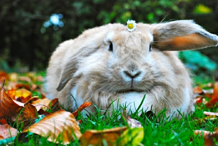 Bunny Has an Autumn Photoshoot in the Leaves 2