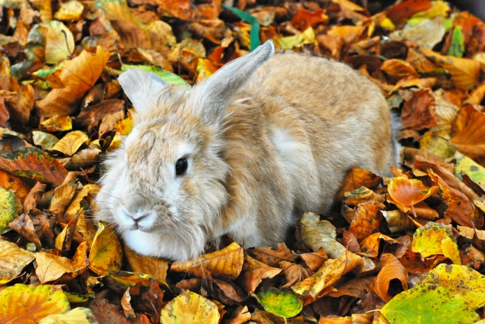 Bunny Has an Autumn Photoshoot in the Leaves 1