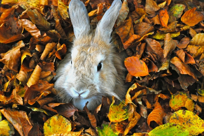 Bunny Has an Autumn Photoshoot in the Leaves 3