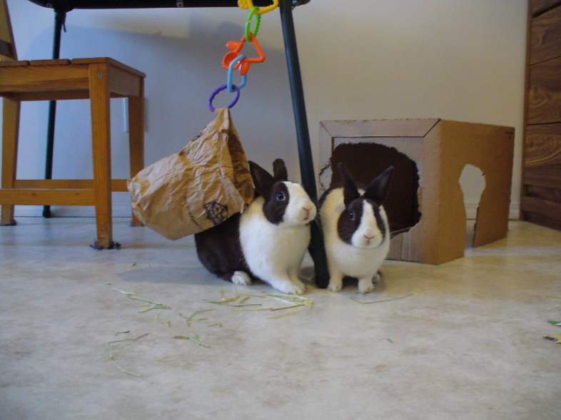 Does That Bag Need a Hay Refill, Bunny? 3