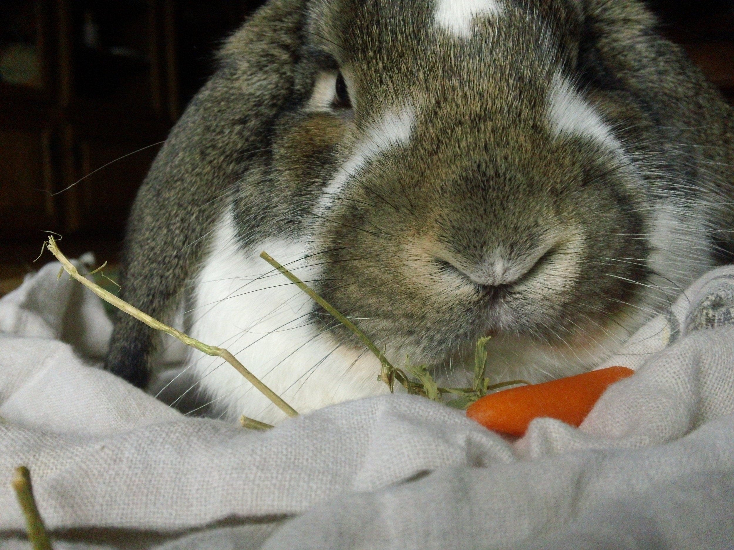 You Get Your Own Carrot, Human. This One's Mine.