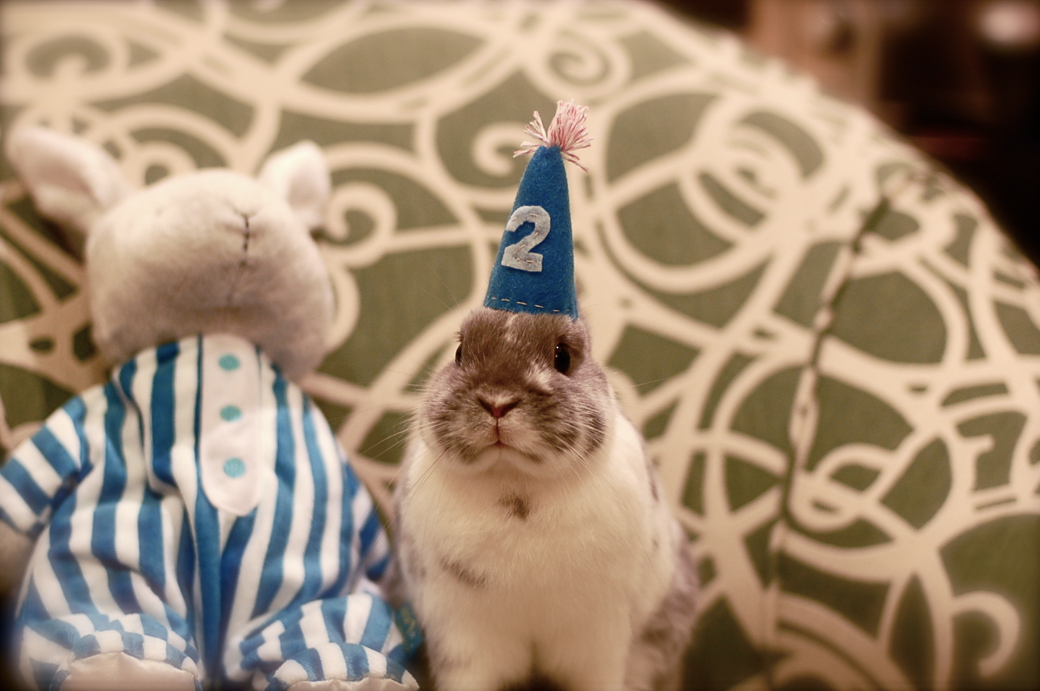 Bunny Celebrates His Second Birthday 1