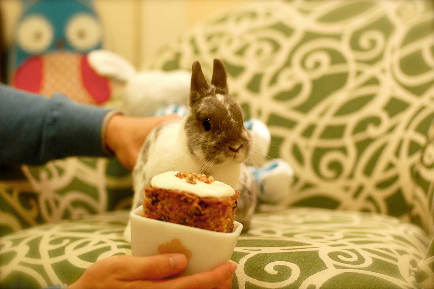 Bunny Celebrates His Second Birthday 2