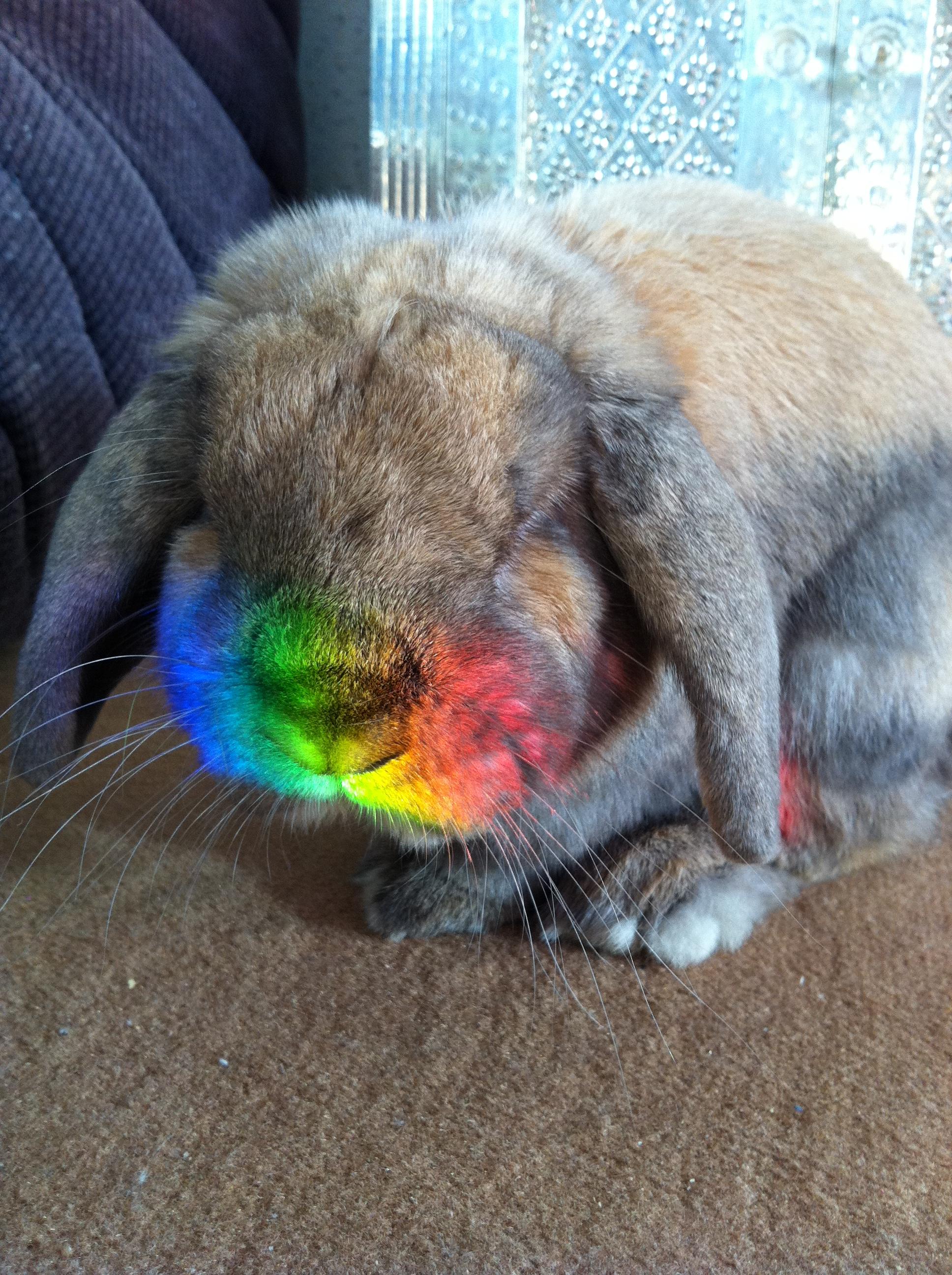 Bunny Stepped into a Rainbow