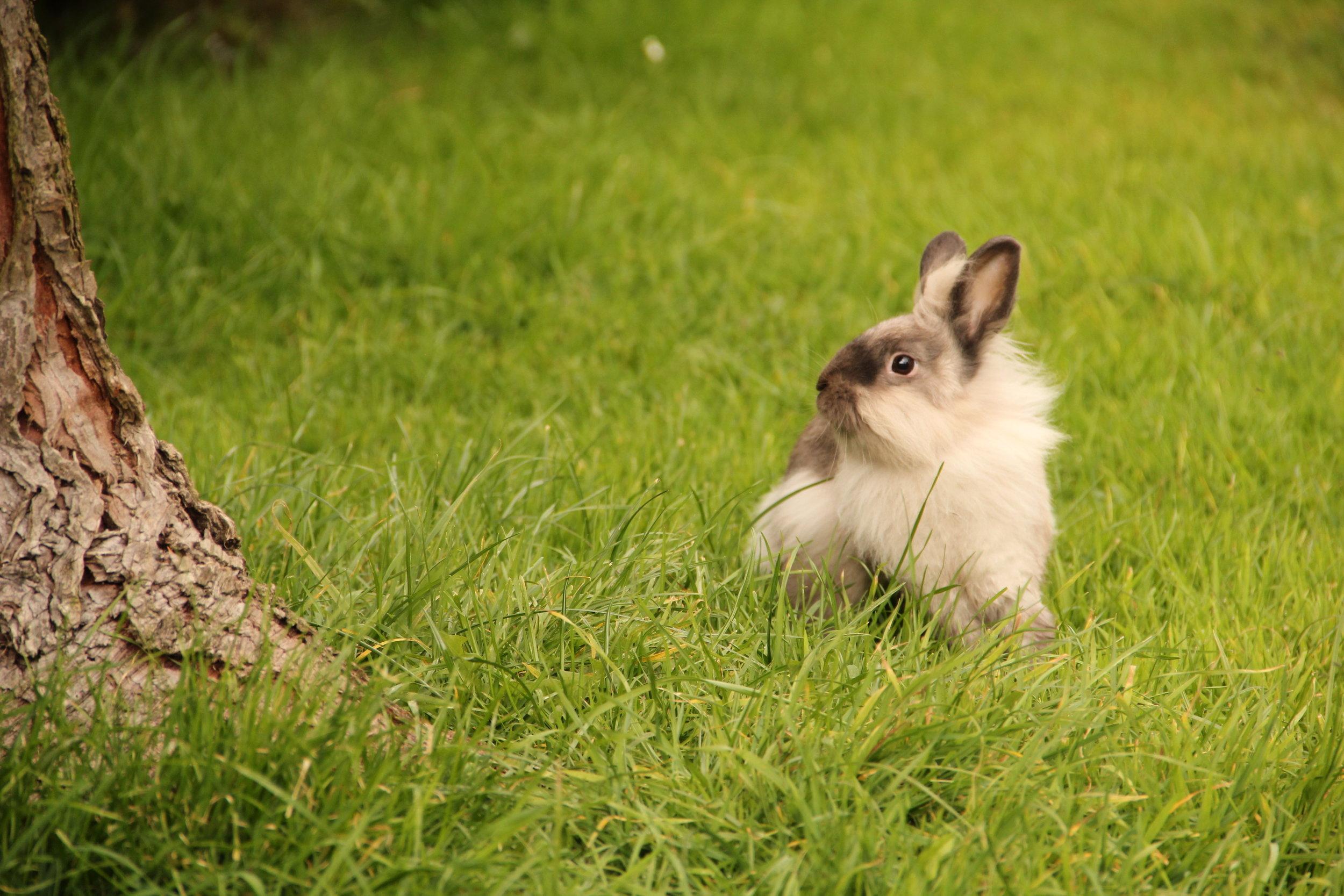 Bunny Coco Poses Like Her Namesake