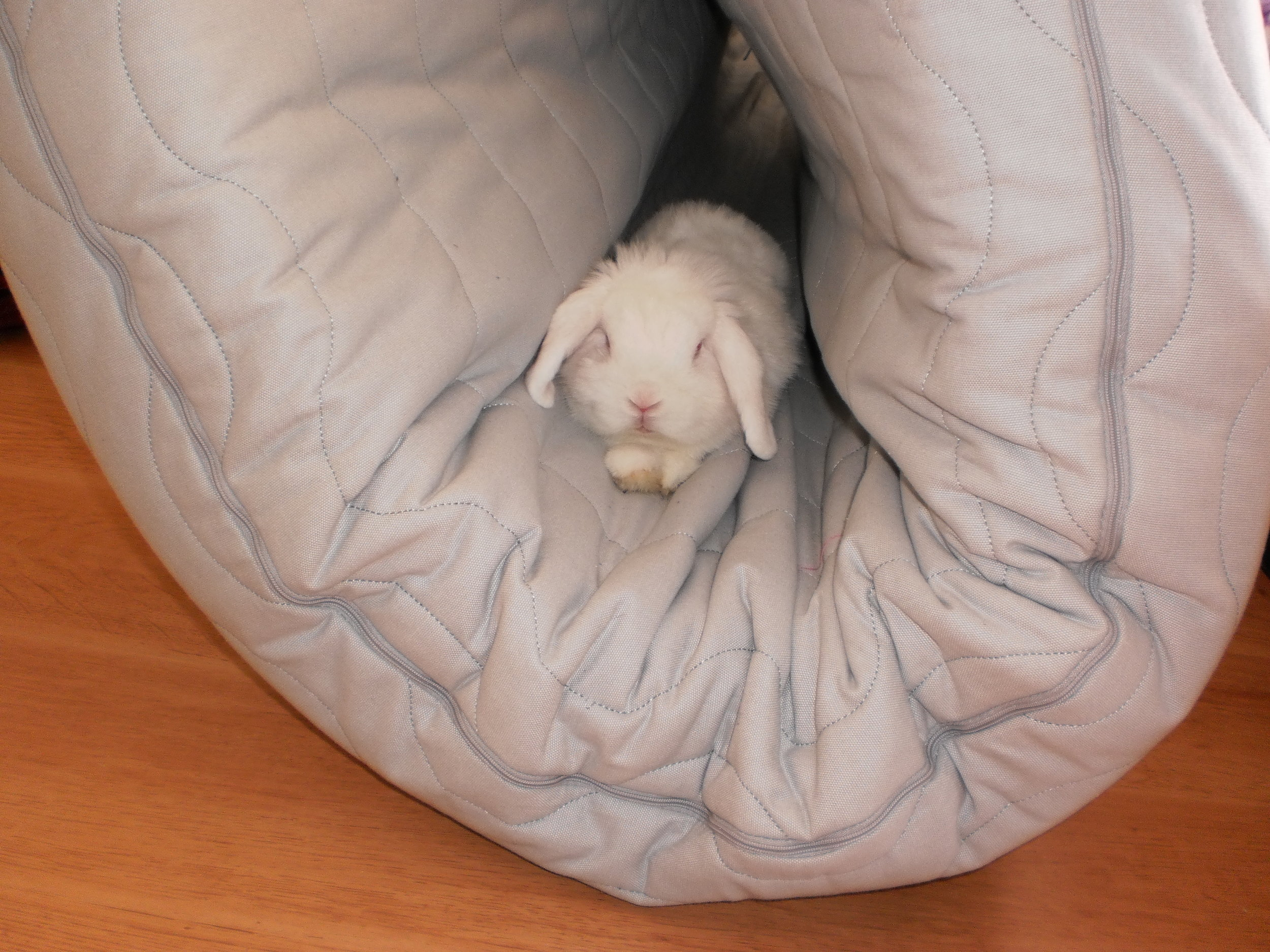Bunny Can Find a Cozy Spot to Relax Anywhere