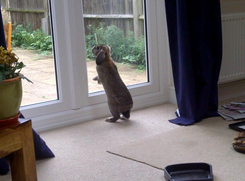 Bunny Yearns to See What's Beyond the Great Transparent Wall