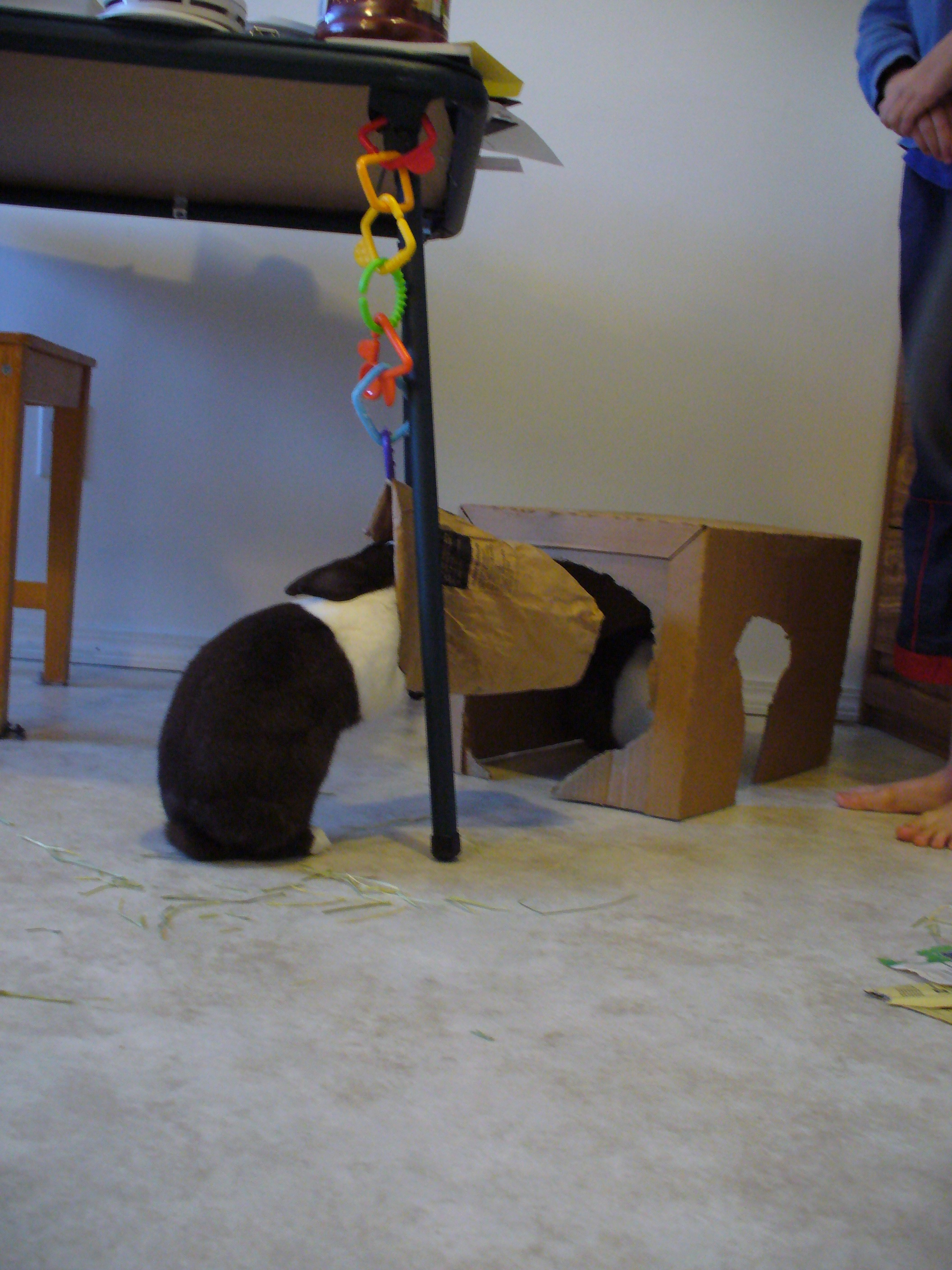 Does That Bag Need a Hay Refill, Bunny? 1