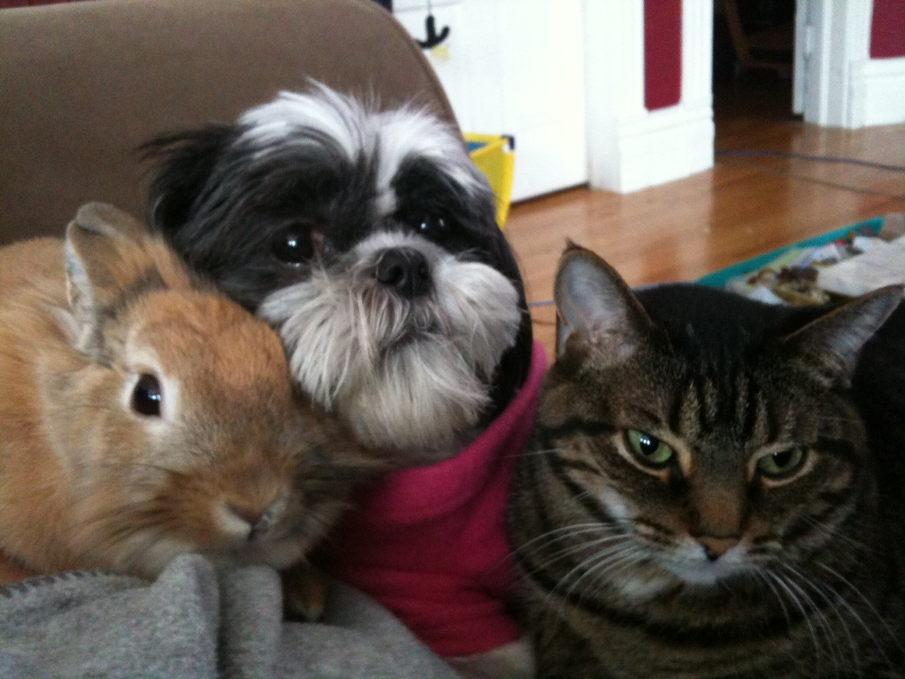 "Bunny and Her Furry Friends All Heard the Word ""Treat"""