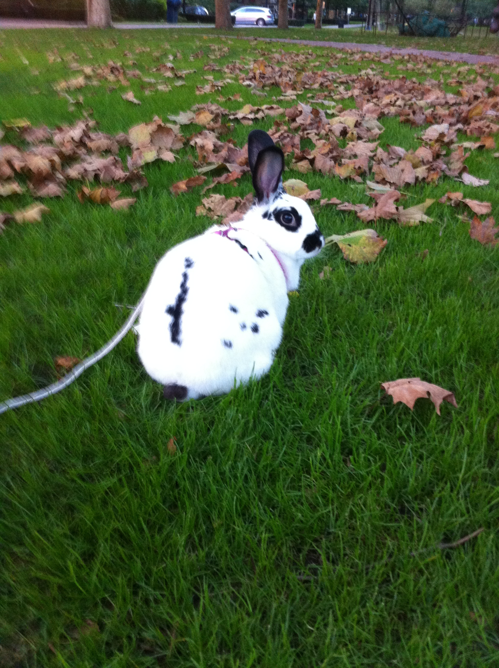 Bunny Goes for an Autumn Walk