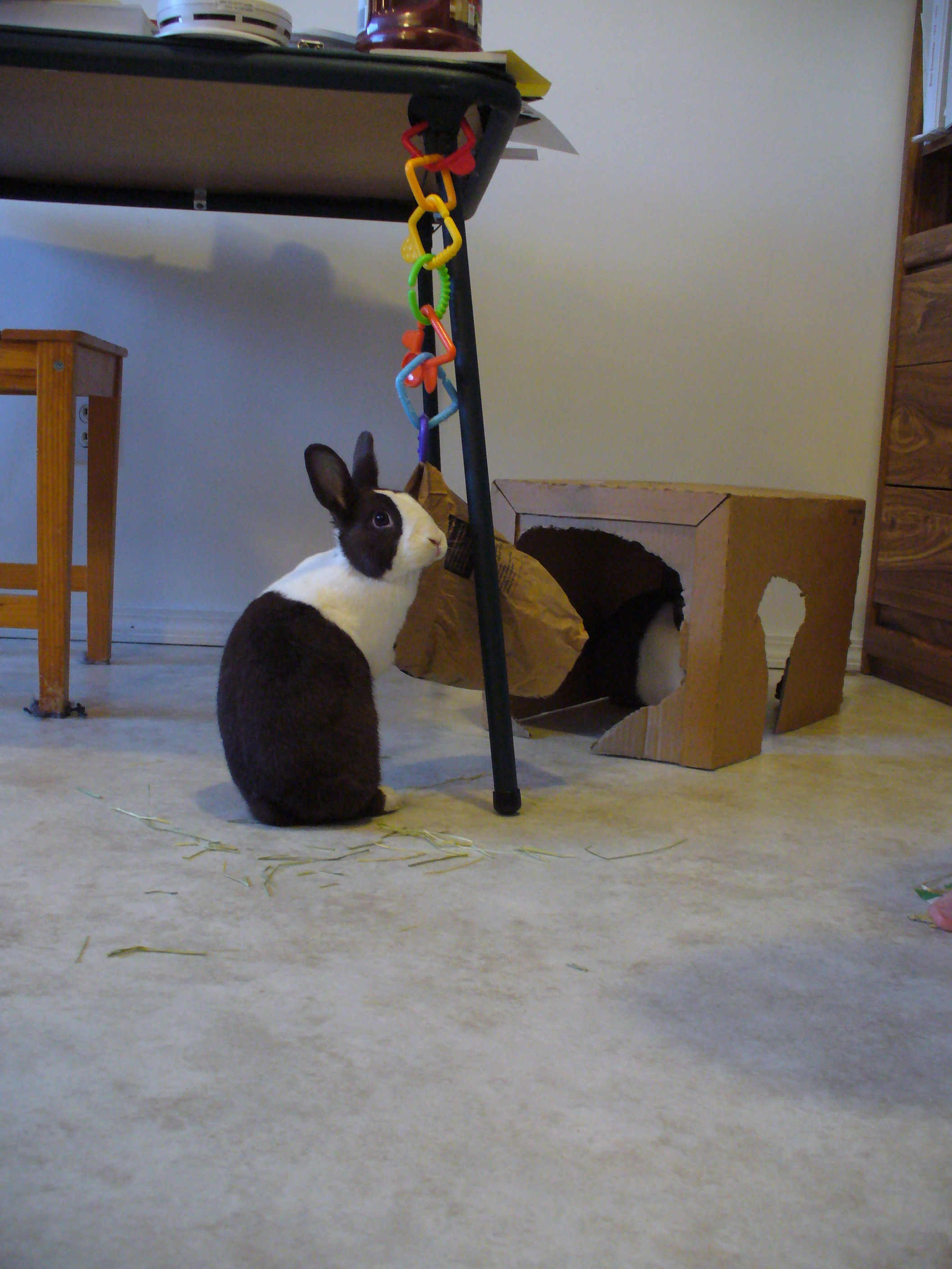 Does That Bag Need a Hay Refill, Bunny? 2