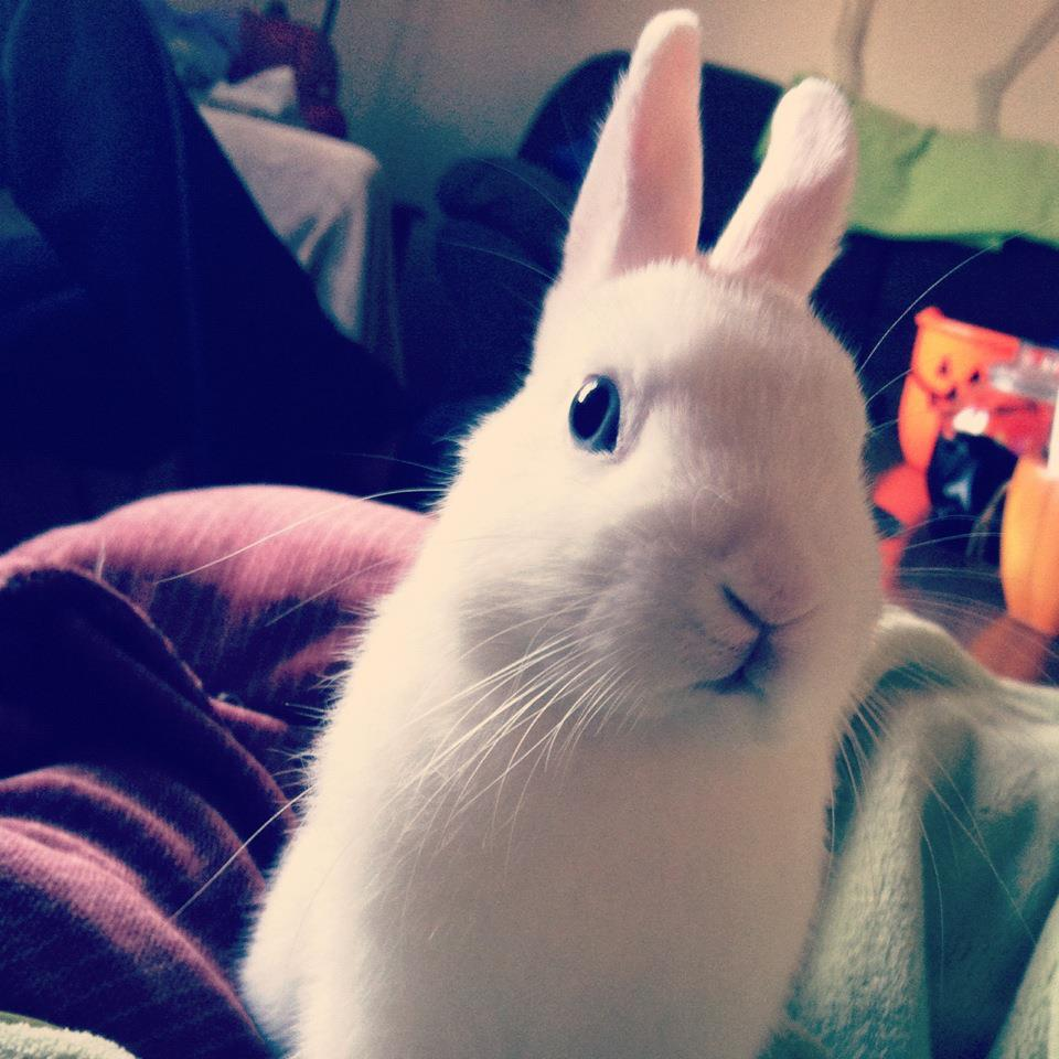 Bunny Gives You the Larry David Staredown After You Tell Him You're Out of Bananas