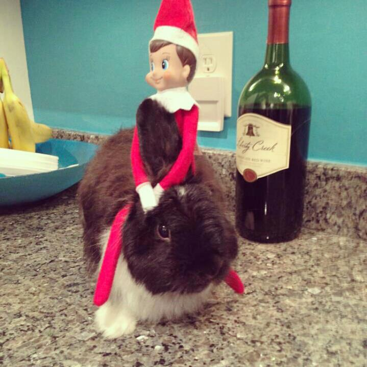 Bunny Gets a Hug from His Elf Friend