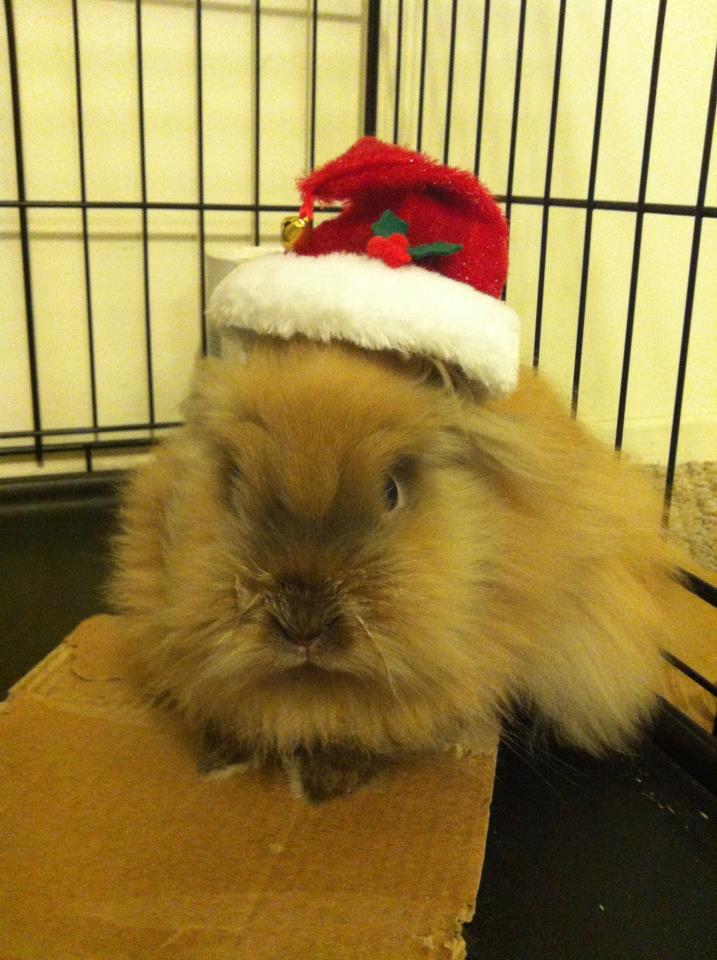 Last-Minute Holiday Bunnies 2