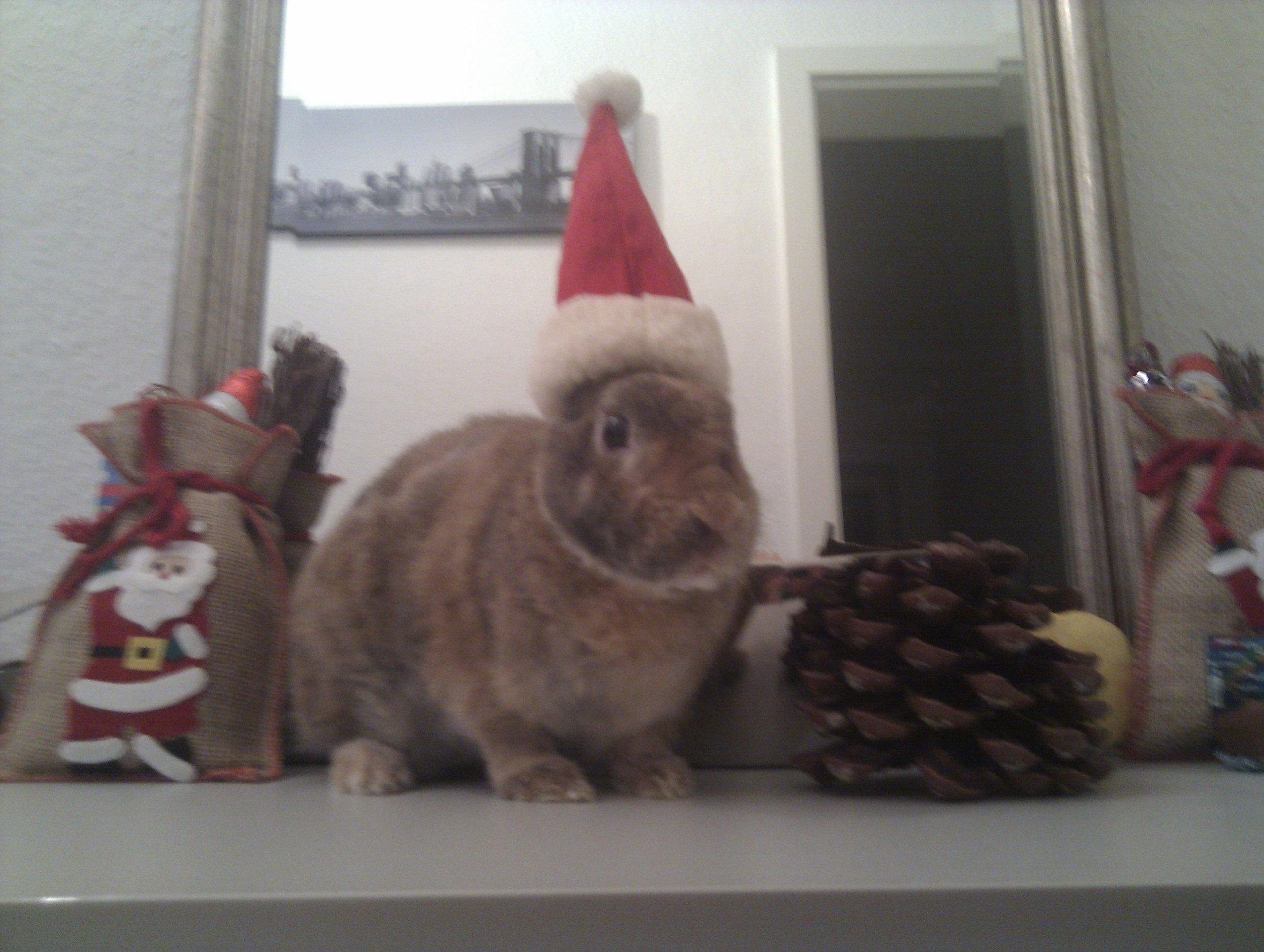 Last-Minute Holiday Bunnies 5