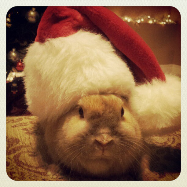 Bunny Will Play the Part of Santa If You Leave Out Carrots and Apples for Him