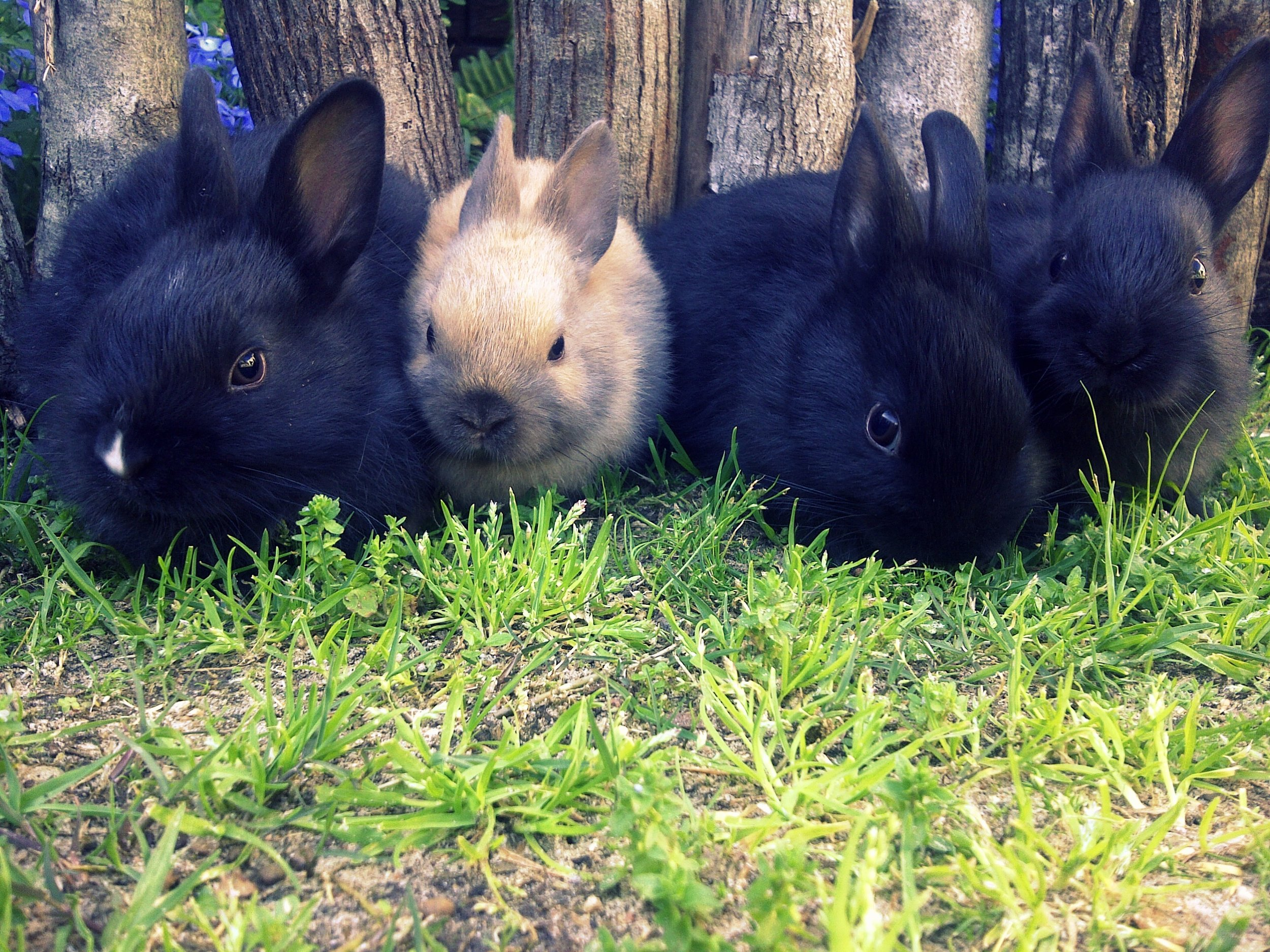 Will Human Correctly Pick Out from the Lineup the Bunny Who Got into the Garden?