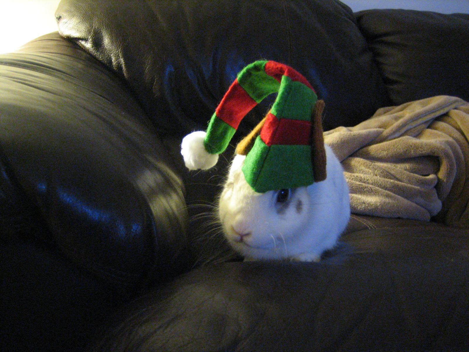 Last-Minute Holiday Bunnies 3