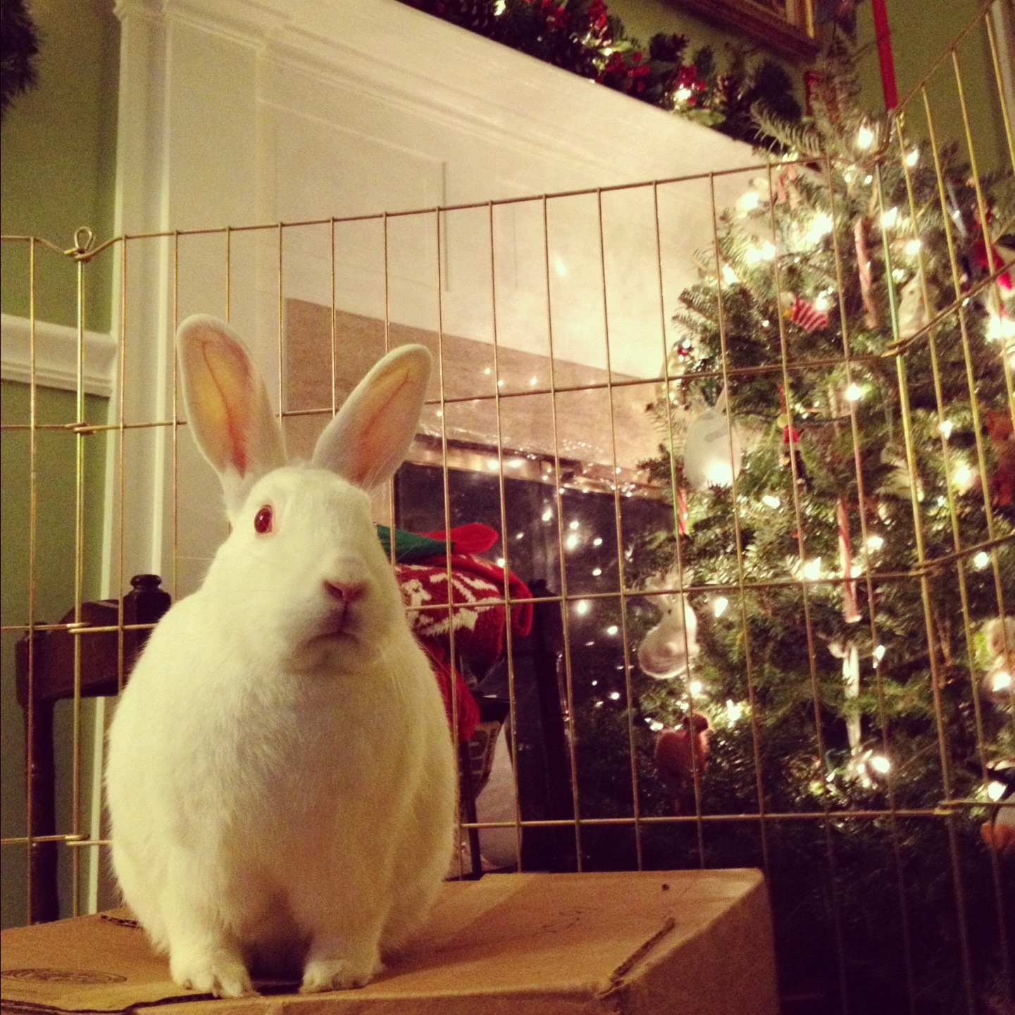 Bunny Disapproves of the Tree and Would Like to Redecorate It Her Own Way