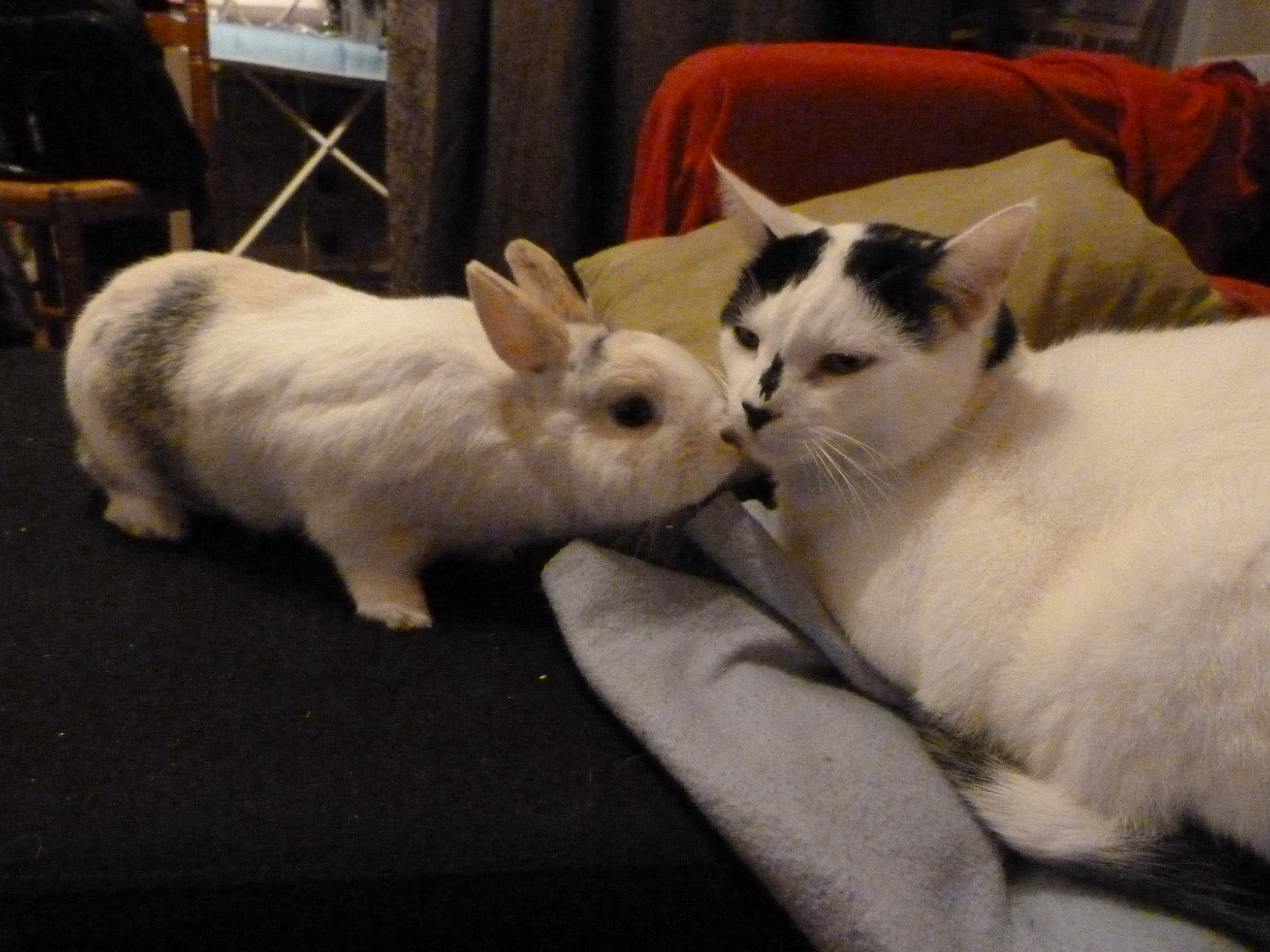 Bunny Tries to Cheer Up Kitty with Nose Kisses