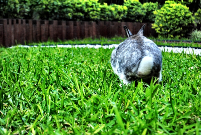 Bunny Is Poised for a Romp Around the Yard 1