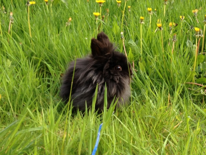 Bunny's Eyes Widen at the Sight of All Those Dandelions 1