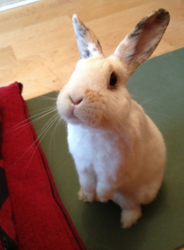 Bunny Looks So Hopeful. Won't You Give Him a Treat? 1