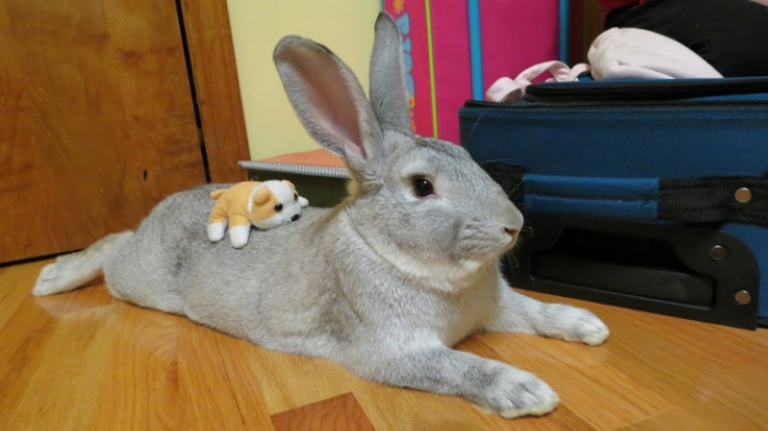 Bunny Gives His Plush Pal a Soft Place to Rest s