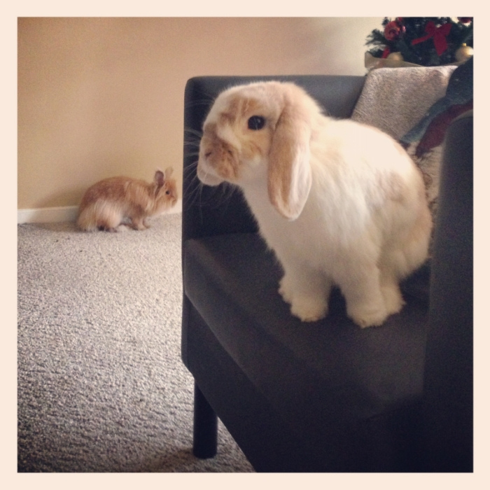 Will Seeker Bunny Find Hiding Bunny on the Chair? s