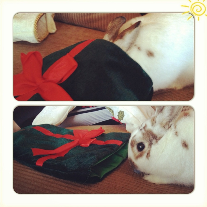 Bunny Double-Checks His Stocking to See If He Missed Any Treats s