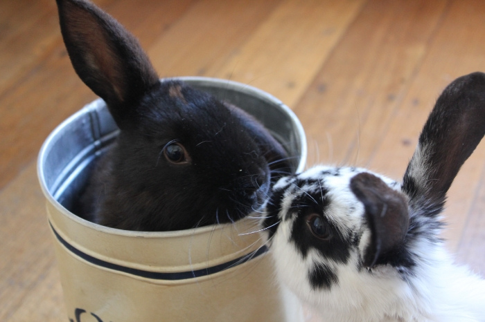 Bunnies Share a Brotherly Kiss