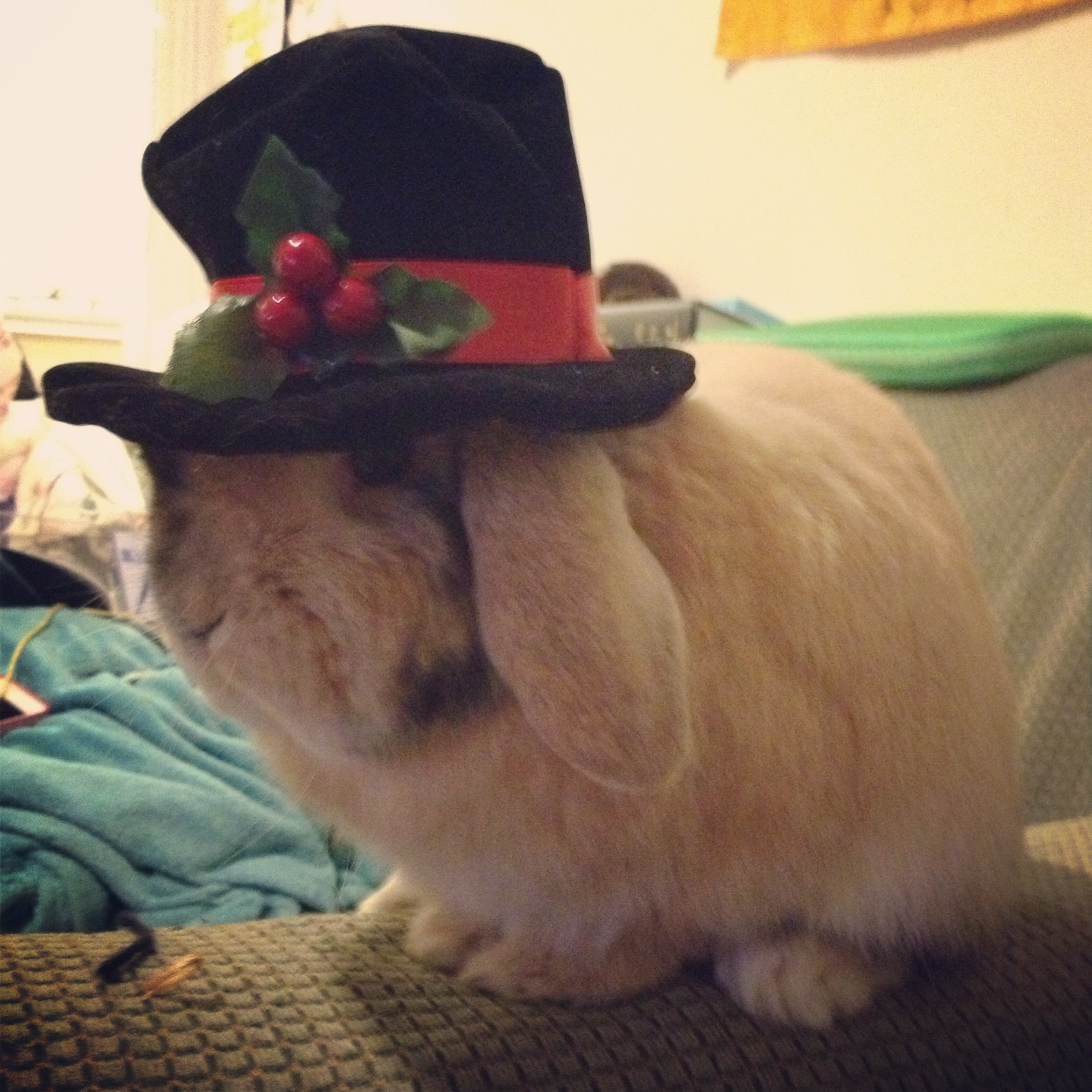 Frosty the Snowman Has Nothing on Bunny