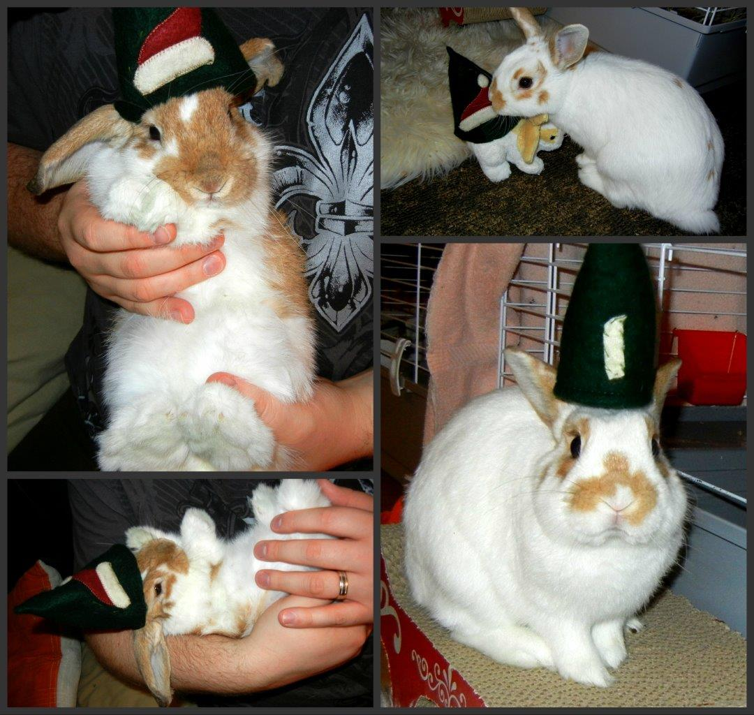 Bunny Models a Hat in Several Shots