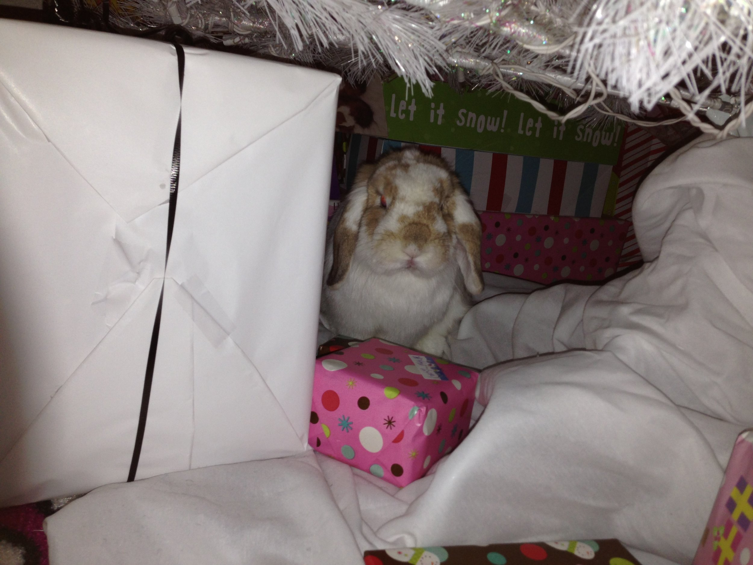 Enough Pictures, Human. Let's Open These Presents!