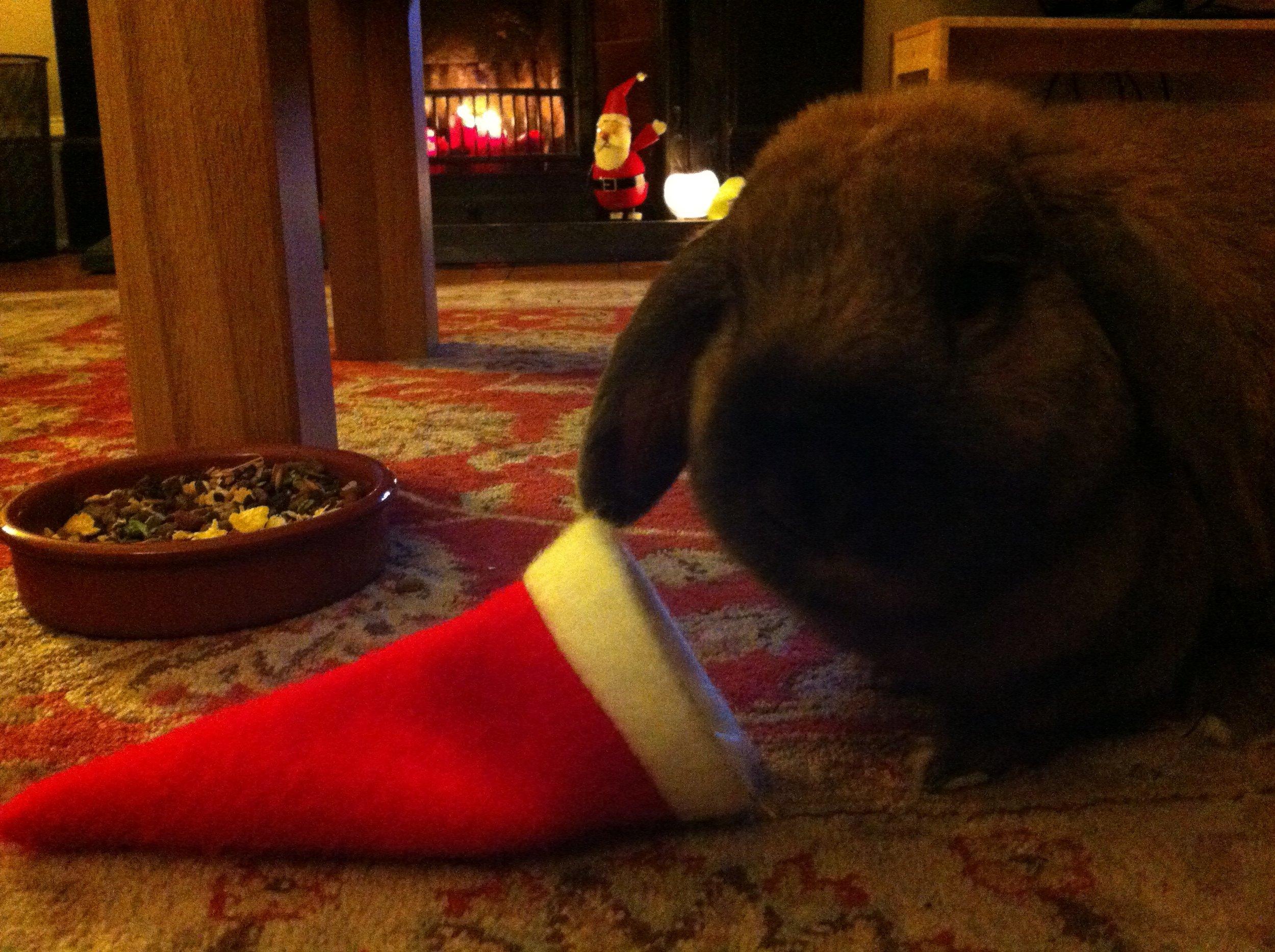 Last-Minute Holiday Bunnies 1