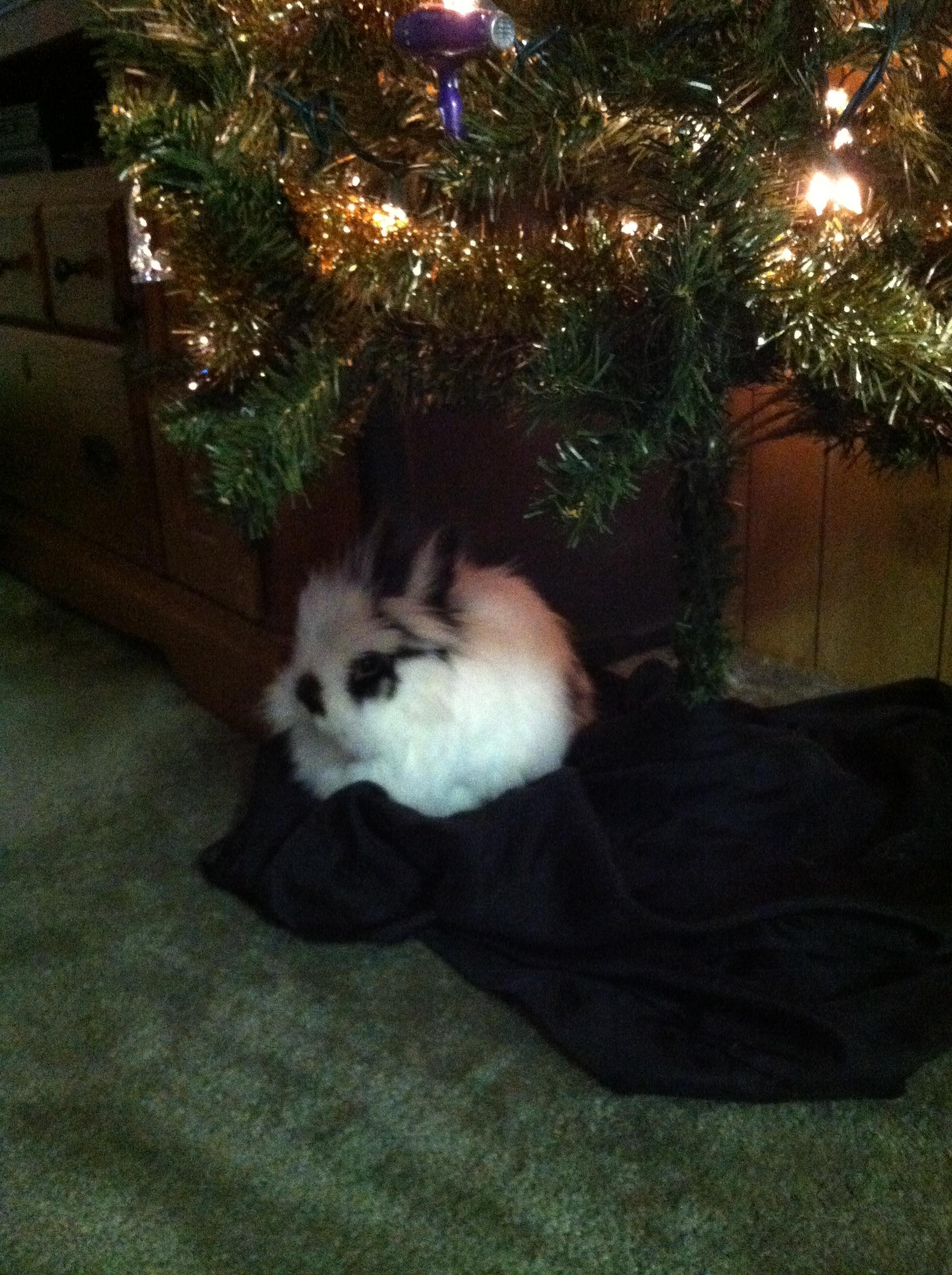 Last-Minute Holiday Bunnies 4