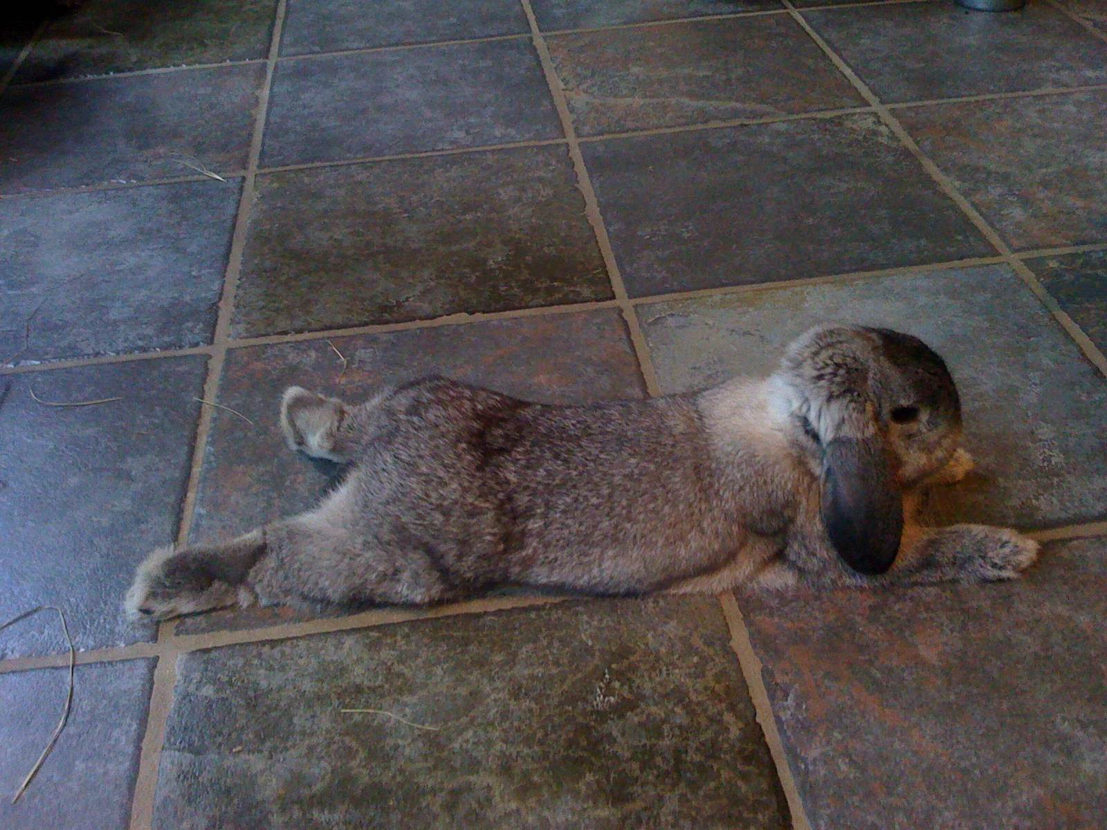 Bunny Sprawls Out on the Tile Floor