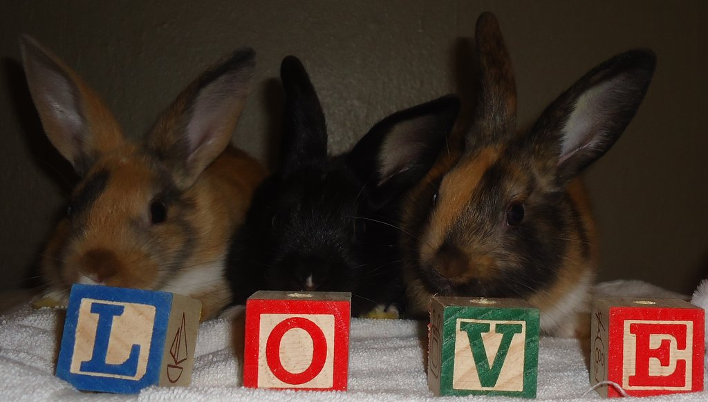 Baby Bunnies Spell Out a Message