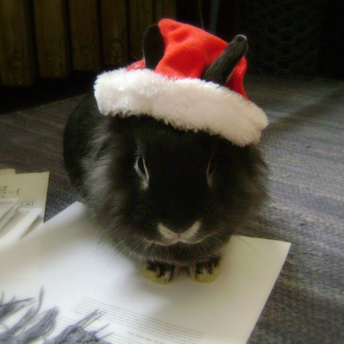 Santa Bunny Has Been Keeping Score of Who Has Given Him Treats, and Who Hasn't