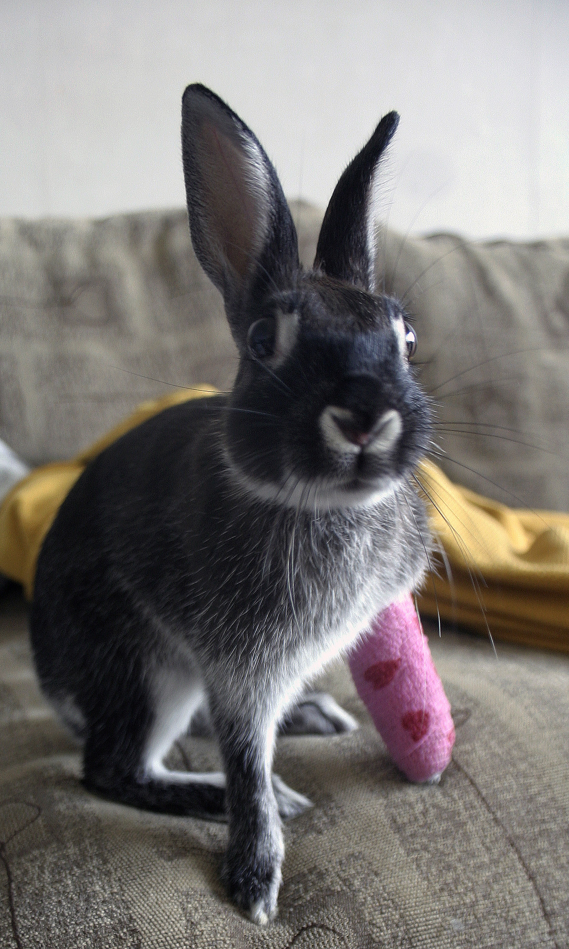 Want to Sign Bunny's Cast?