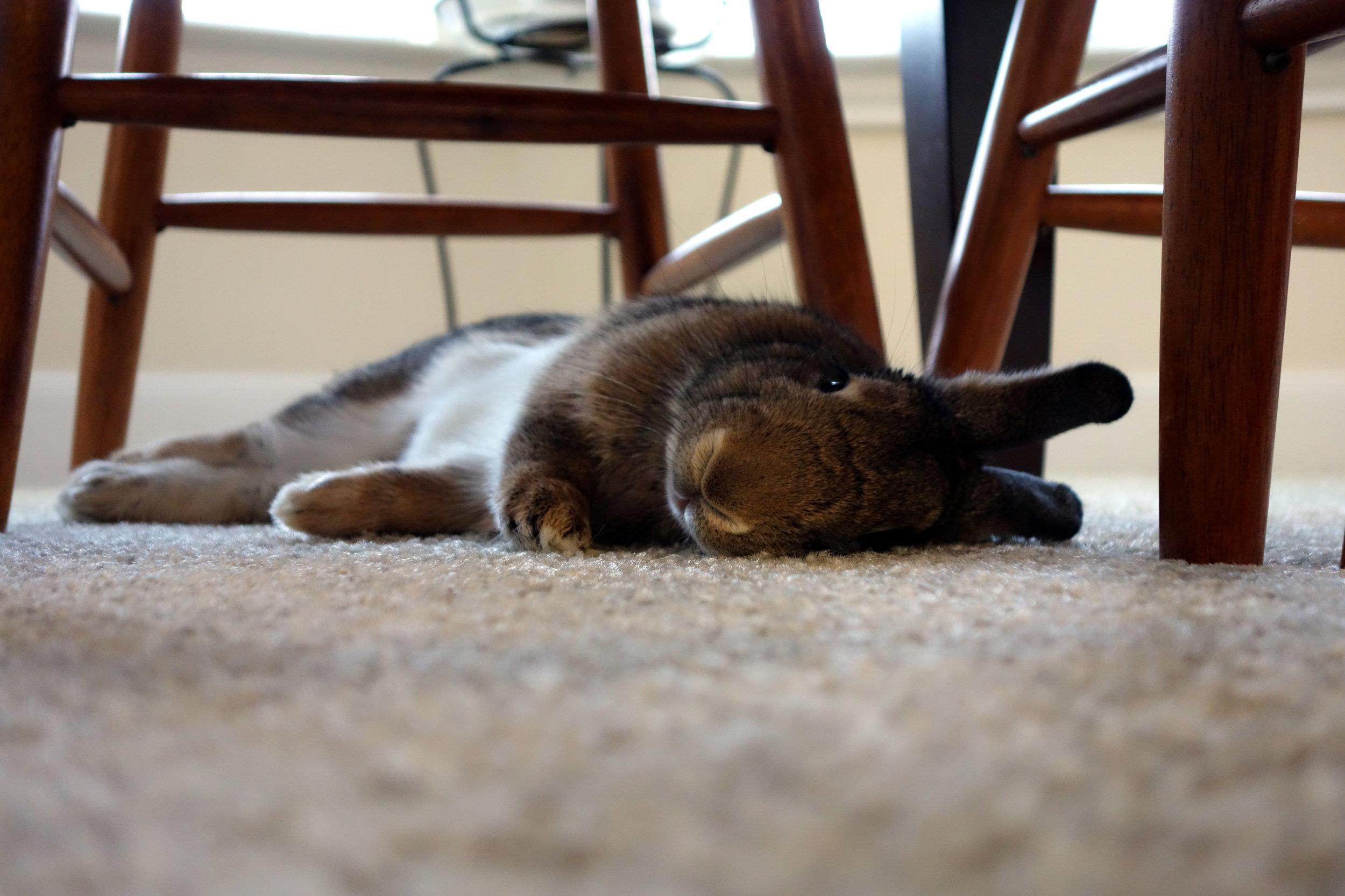 Sweet Photo of a Sleepy, Flopped Rabbit