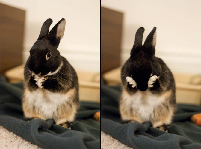Two Steps in the Bunny Face-Washing Procedure