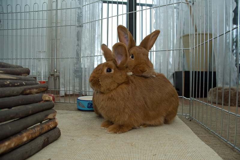 Bunny Gives His Girlfriend Bunny a Back Massage