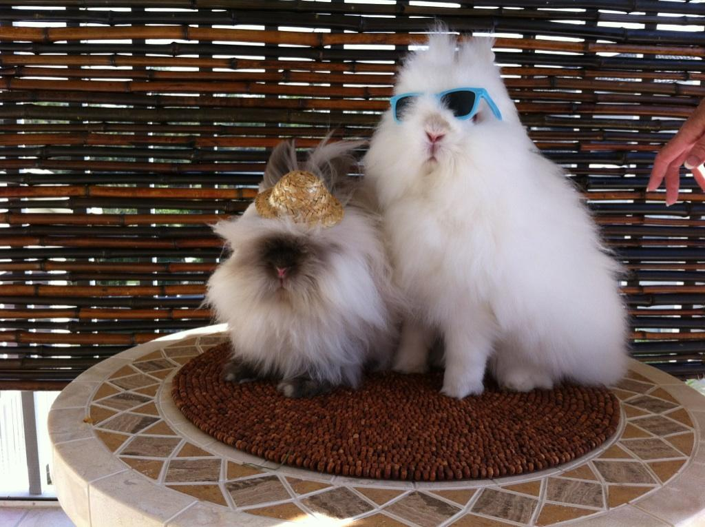 Bunnies Are Done with Snow and Ready for a Sunny Vacation